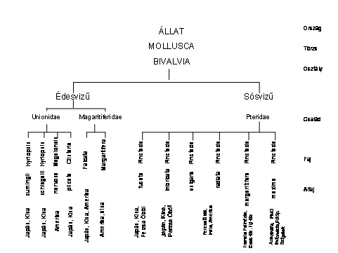 pearlgallery-bielek-006-hu
